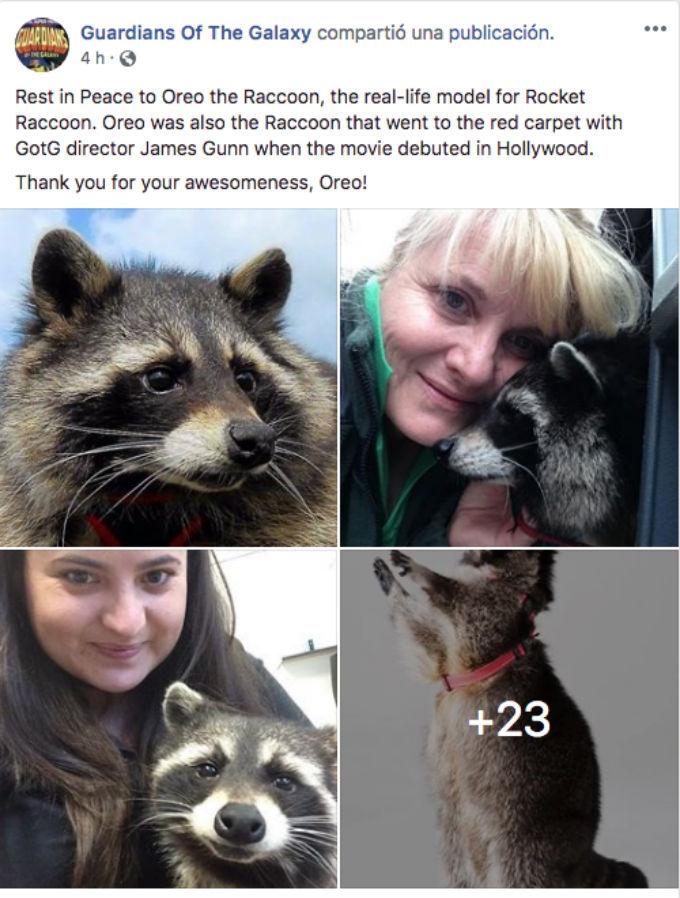 Oreo, el mapache que dio vida a Rocket Racoon perdió la vida.