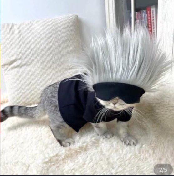 Jujutsu Kaisen ha llegado a la cima del cosplay con esta versión de Gojo Satoru para un gatito, ¿qué podría ser mejor que eso?